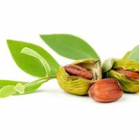 Les meilleures huiles de jojoba